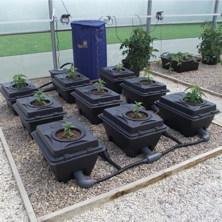 DWC Growing Systems | Somerset Hydroponics