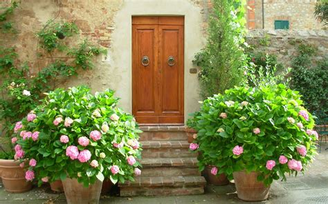 Growing Hydrangeas in Pots – NANCY WITH THE LAUGHING FACE
